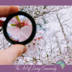 Focus on What You Want in Order to Create it for Yourself - The Art of Living Consciously